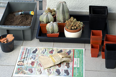 Vorbereitung Kaktus umtopfen