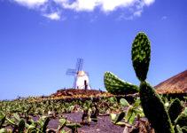 Wie kann ein Kaktus in der Wüste überleben?