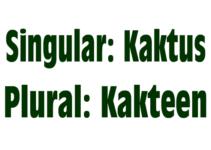 Kaktus Mehrzahl – Plural