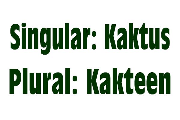 Singular Kaktus - Plural Kakteen